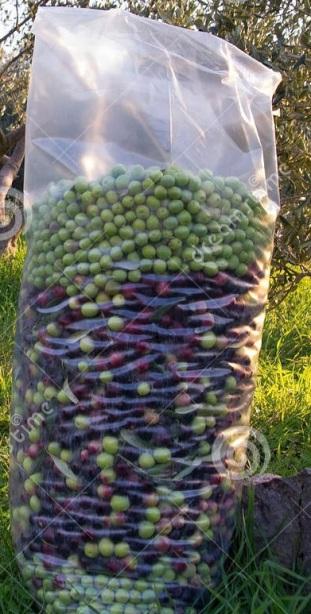 olive-nella-borsa-di-trasporto-28042227